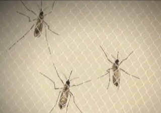 Officials: No Zika found in Florida Mosquitoes