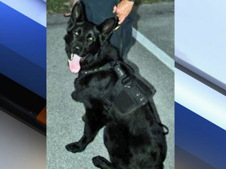 Sebastian police officer charged in K9's death