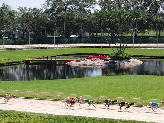 Cocaine found in 5 greyhounds after Florida races