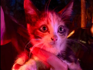 Firefighters rescue kitten from storm drain