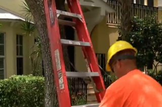 Consider trimming trees before hurricane season