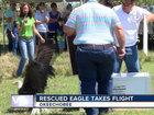 Rescued bald eagle released in Okeechobee County
