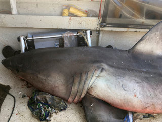 Shark leaps into boat and lands on fisherman