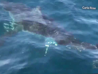 Fla. family has close encounter with great white