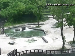 VIDEO: Elephants team up to rescue calf