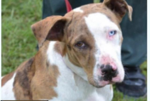 Animal control-s urgent plea to adopt