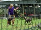 Okeechobee County faces animal overcrowding