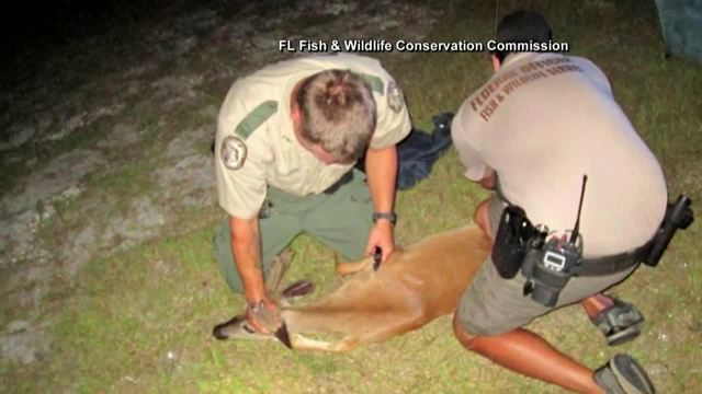 Florida Deputies rescue 3 endangered deer from vehicle