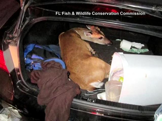 Police arrest men after 3 deer found tied up in auto