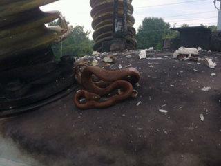 Big Florida snake knocks out power to 22,000
