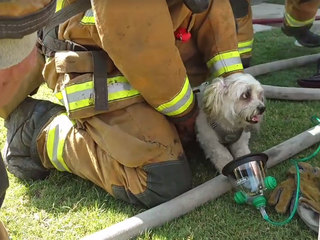 Firefighters bring nearly dead dog back to life