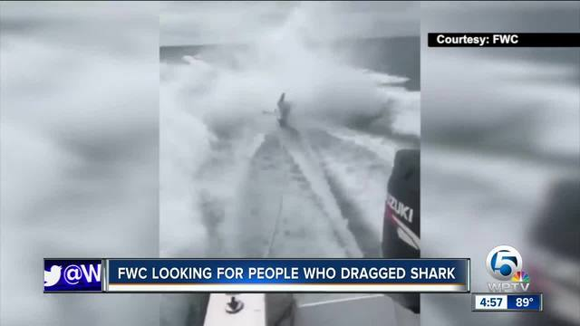 FWC looking for people who dragged shark