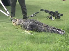 Florida man recovers from alligator attack