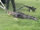 Alligator attack survivor recovering