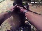 VIDEO: Boynton police officer captures alligator