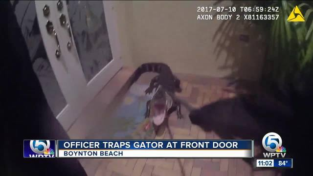 Body cam footage of gator captured at house