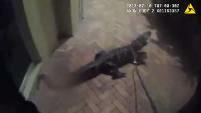 Caught On Camera: Cop Tackles Angry Six-Foot Alligator Like A Pro