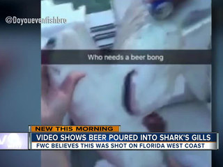FWC investigating second shark abuse video