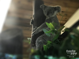 Koala boards flight and flown to new home in WPB