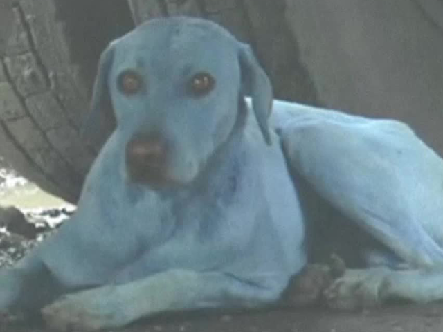 River Pollution Causes Dogs To Turn Blue