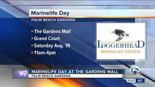 Marinelife Day at The Gardens Mall on Aug. 19