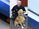 Golden retriever digs up heroin in Oregon yard