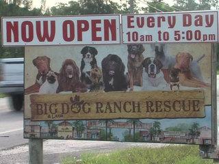 Big Dog Ranch Rescue sends teams to Texas