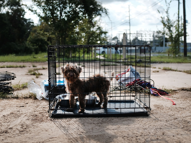 Scores of dogs were left to die in Irma