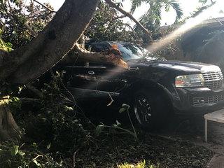 Tree falls onto Boynton Beach family's truck