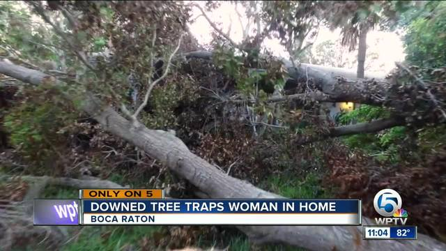 Downed tree traps woman in home