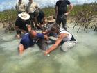 Stranded porpoise rescued off Sugarloaf Key