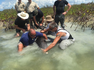 Stranded porpoise rescued off Sugarloaf Key