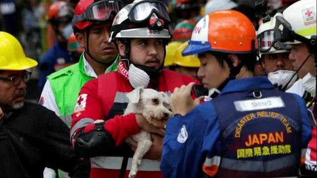 Dog pulled from rubble alive days after quake struck Mexico City
