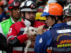 Dog pulled from rubble alive days after quake
