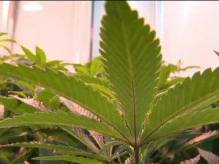 PB Gardens to vote on medical marijuana ban