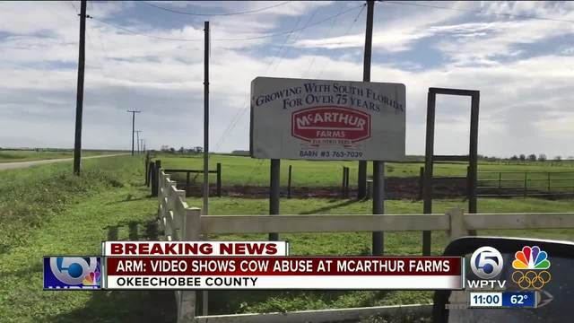 Animal Recovery Mission says video shows cow abuse at McArthur Farms in…