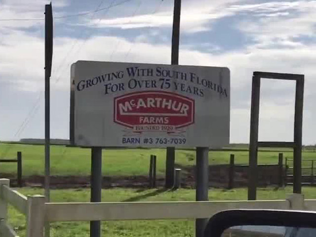 ARM- video shows cow abuse at McArthur Farms