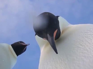 VIDEO: Curious penguins find camera, snap video