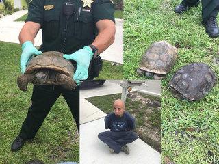Accused poacher admits he eats gopher tortoises