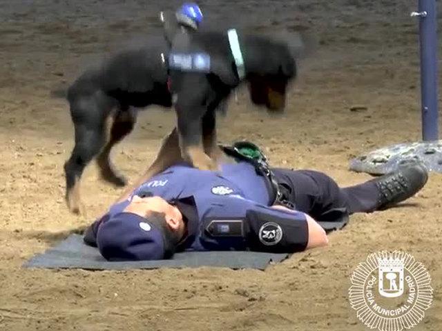 Resultado de imagen de Poncho dog police