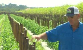 Florida growers left out of new trade agreement