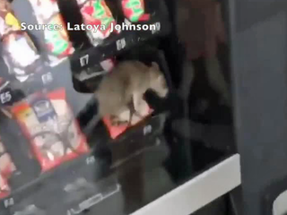 Video shows rat inside vending machine at school