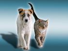 Toughening penalties if pets harmed during crime