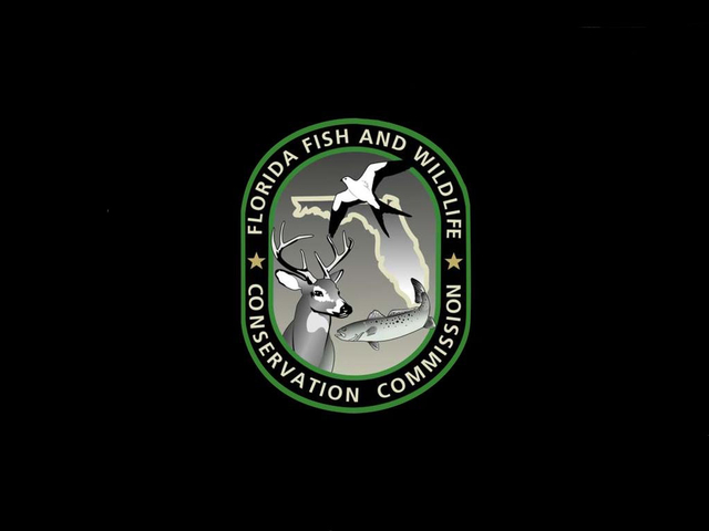 Florida fish and wildlife conservation for Florida fish and wildlife commission