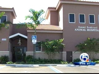 Hurricane-ready local animal hospital