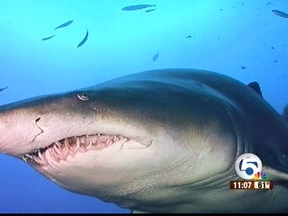 Local shark expert disputes shark findings