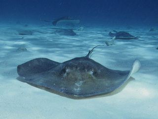 Woman hospitalized after Florida stingray attack