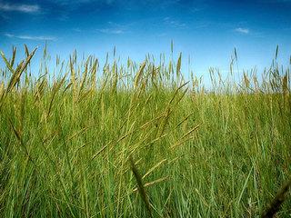 Fertilizer ban in effect on Treasure Coast