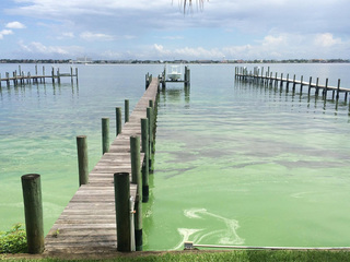 Scientists fear toxic algae blooms possible