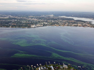Interactive: Florida algal blooms mapped